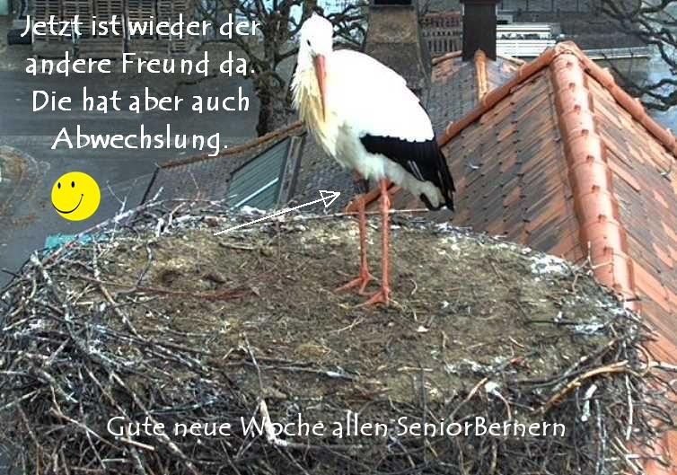 BernerStorch04.03_2019-03-04.jpg